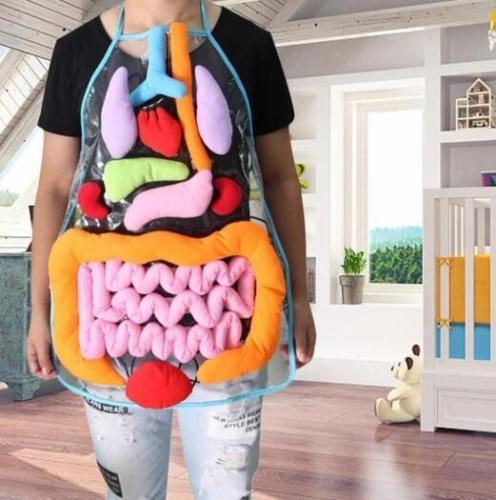 Body Anatomy Apron