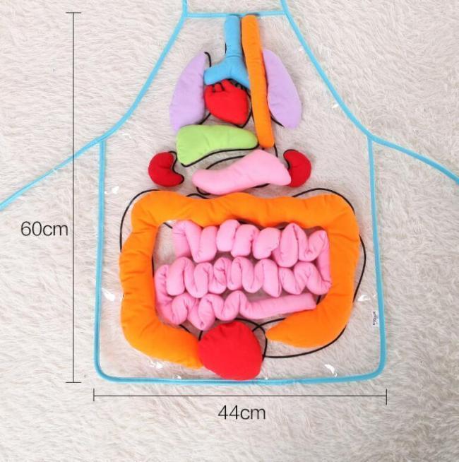 Body Anatomy Apron