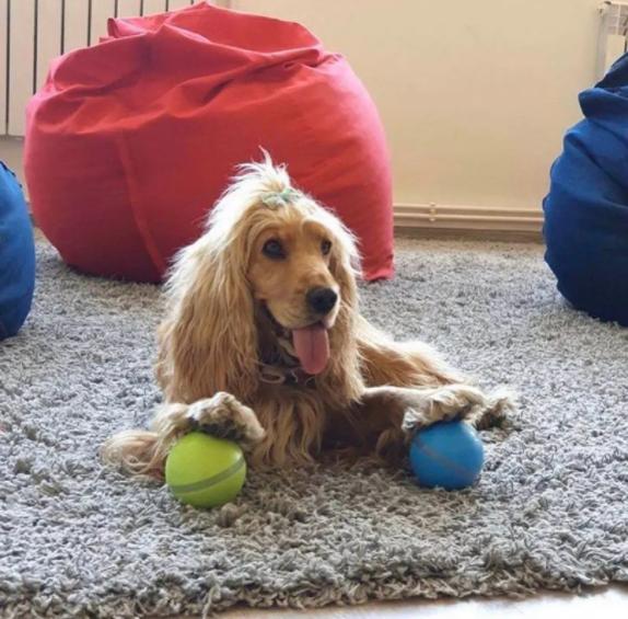 Pet automatic smart toy ball