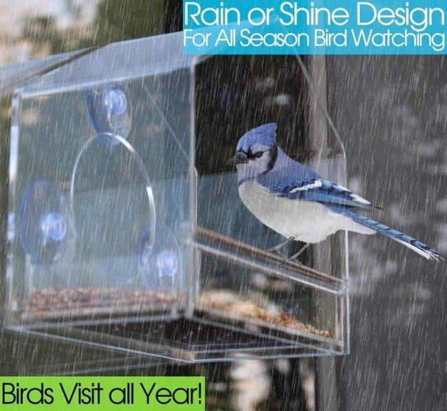 Window Bird Feeder- See Songbirds from Home!