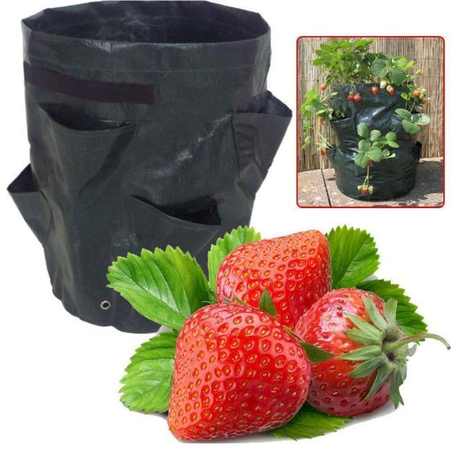 8 Pockets Potato Strawberry Planter Balcony Strawberry Planting Bag Herbs Vegetables Garden