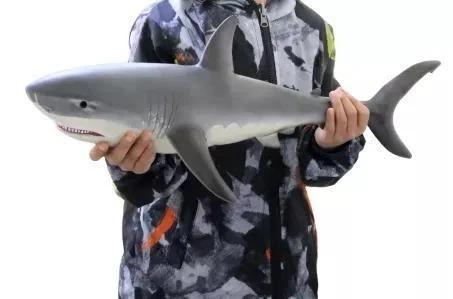 Lifelike Baby Shark Doll