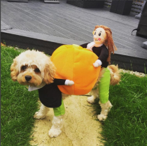Pumpkin Costume for Pets