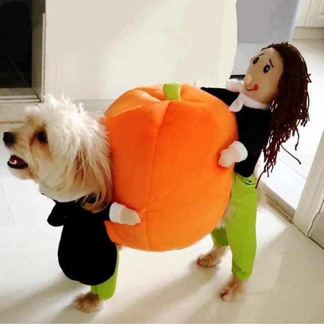 Pumpkin Costume for Pets