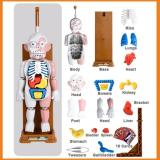 Mannequin Assembly Skeleton Scary Halloween Ghost Festival Horror Spoof Gift Tricky Decompression Party Desktop Toys