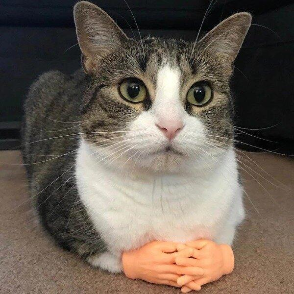 Funny Little Finger Latex Gloves Cat Massage Tool Toy