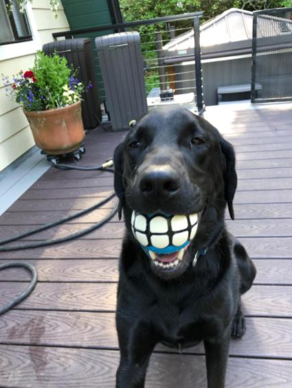 Smiling Dog Toy