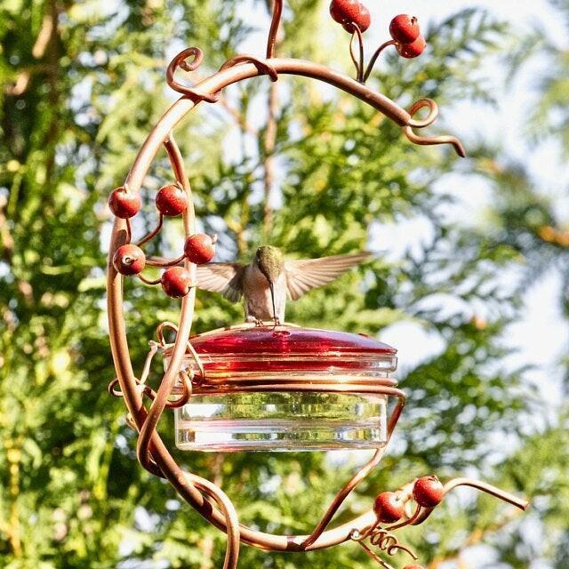 Red Berries Hummingbird Feeder