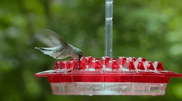 Mary's Sweety Hummingbird Feeder With Perch And Built-in Ant Moat