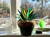 Suncatcher Stained Agave Plante
