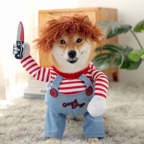 HOT SELL🔥HALLOWEEN FUNNY DOG/CAT CLOTHES