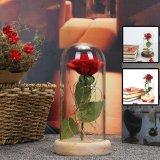 Enchanted Preserved Red Rose Light
