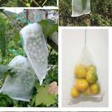 FRUIT EXCLUSION BAGS (50PCS)
