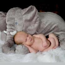 Big Soft Baby Elephant