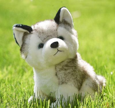 Realistic Husky Dog Pomsky
