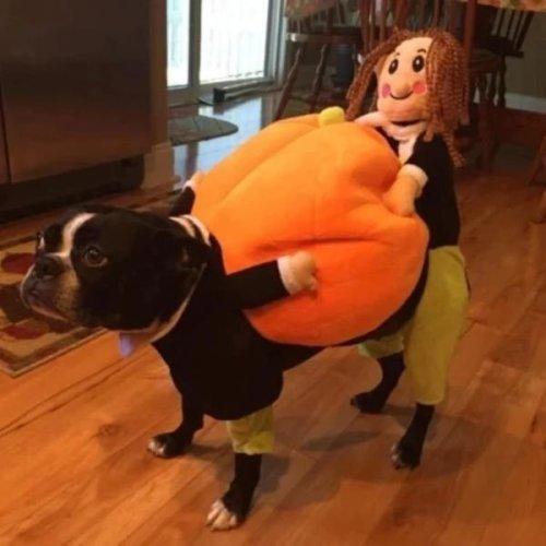 (🎃Early-Halloween Hot Sale) Pet Dog Pumpkin Halloween Costume