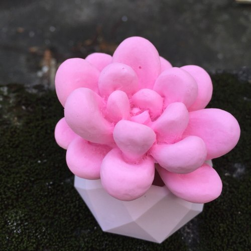 BK1138  Succulent Plants   DIY Aroma Gypsum Plaster