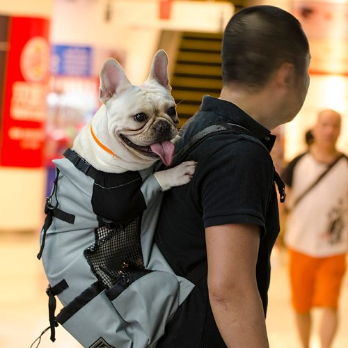 Adjustable Pet Dog Outdoor Travel Backpack For Hiking Cycling Reflective Carrier Bag For Dogs French Bulldog Pug Carrying Bags