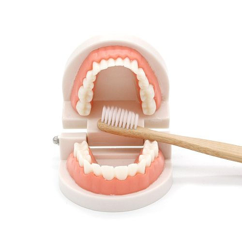 Montessori Educational Toys for Children Early Learning Kids Intelligence Brushing Tooth Teaching Aids Simulated Practical Life