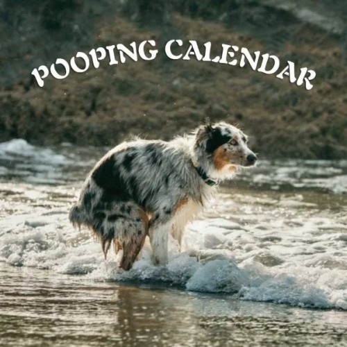 2021 Pooping Pooches Dog Calendar