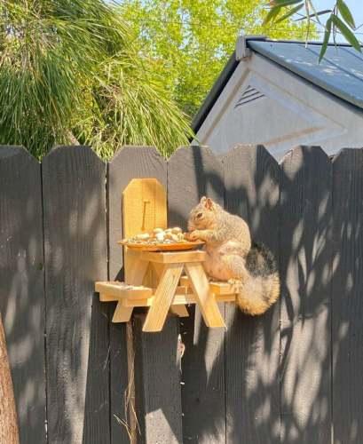 Cute and fun picnic table squirrel feeder