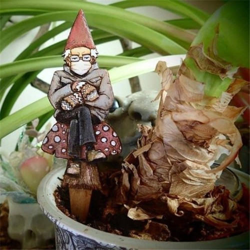 Bern in a fern - Grumpy Bernie Garden Gnome Plant