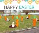 Hasen und Karotten graben
