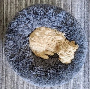 Best Calming Dog&Cat Beds For Anxiety Relieving & Cuddling Your Pet In Round Orthopedic Soft Donut Style