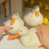 🔥40%OFF🔥Realistic Naughty Pet Ducks (Lucia)