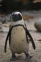 🔥Buy One Get One Free-Lifelike Baby Penguin