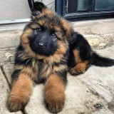 🔥 HOT SALE 🔥 Realistic Shepherd Dog