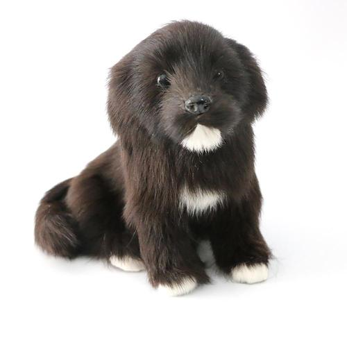 Realistic cute little black dog