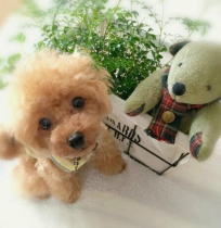 🔥$19.99 Last Day🔥Realistic Teddy Dog Lucky