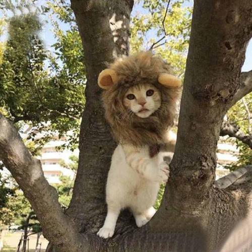 Pet hat - lion