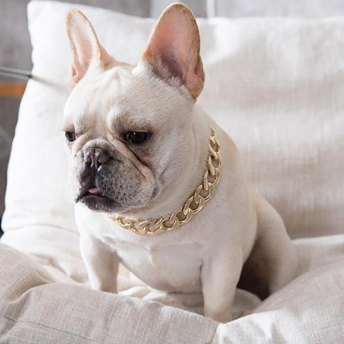 Gold Chain Pets Safety Collar-It is adjustable and fits pets of all sizes