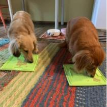 LICK MAT FOR SOOTHING ANXIOUS DOGS