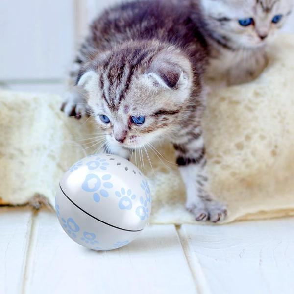 Cat Play Ball