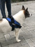 Lifetime Warranty Personalized NO PULL Dog Harness