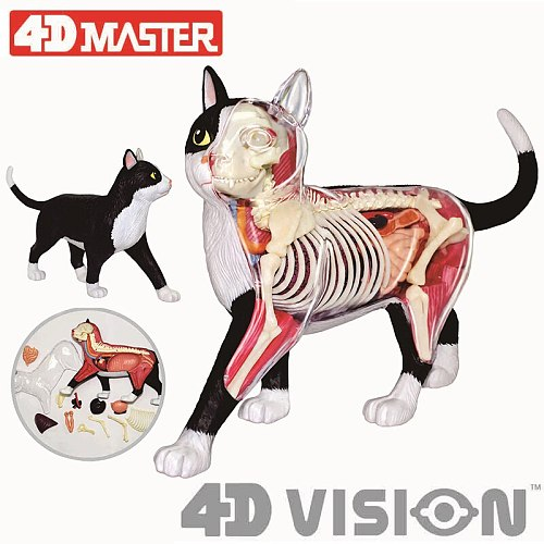 4D black and white cat Intelligence Assembling Toy Animal Organ Anatomy Model Medical Teaching DIY Popular Science Appliances