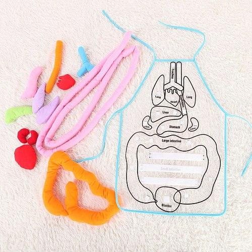 Educational Insights Toys For Children Anatomy Apron Human Body Organs Awareness Preschool Science School Teaching Aids