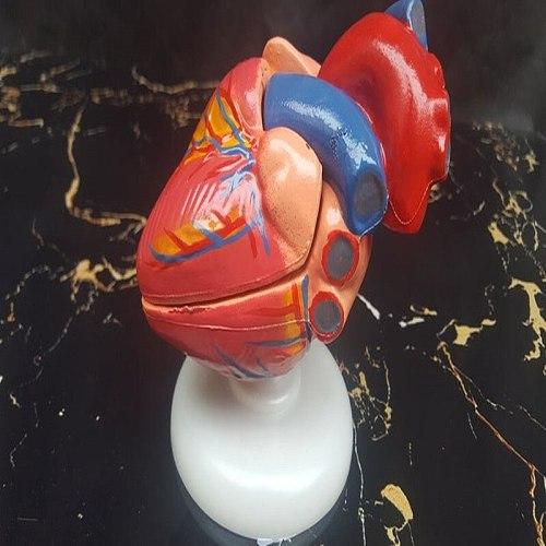 1:1 life size Medicine Medical Gastrointestinal Anatomical model heart hunman educational Vintage Human heart Model Internal