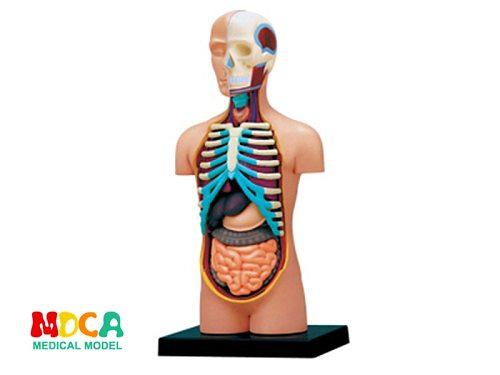 Viscera 4d master puzzle Assembling toy human body organ anatomical model medical teaching model