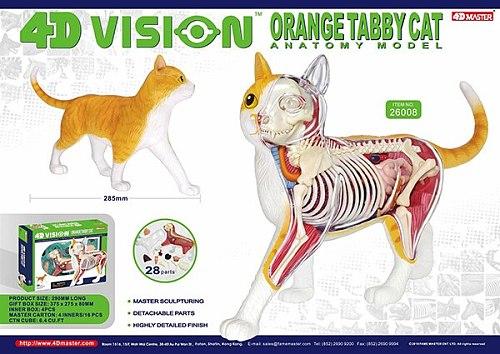 4D animal model black and white cat orange cat model organ anatomy assembly model decoration medical teaching aids