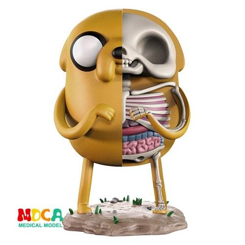 Jake 4D XXRAY master Mighty Jaxx Jason Freeny anatomy Cartoon ornament