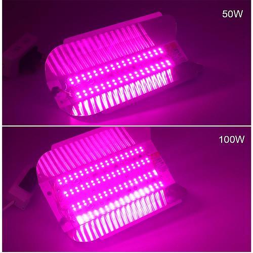 Borbede Grow Light 50W/100W 220V/110V Full Spectrum Indoor Led Plant Grow Light Waterproof Flood Lights EU US Plug