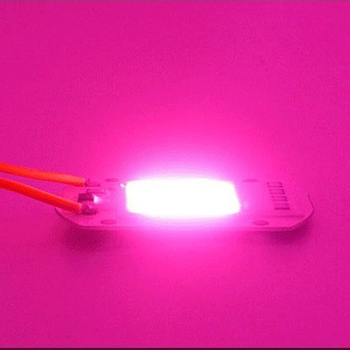 5pcs LED Grow COB Chip Phyto Lamp Full Spectrum AC220V 10W 20W 30W 50W For Indoor Plant Seedling Grow and Flower Growth Lighting
