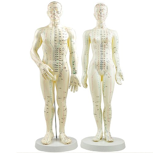 Acupuncture Model 50cm Male female with Base Human acupuncture meridians model Acupuncture Starter Kit