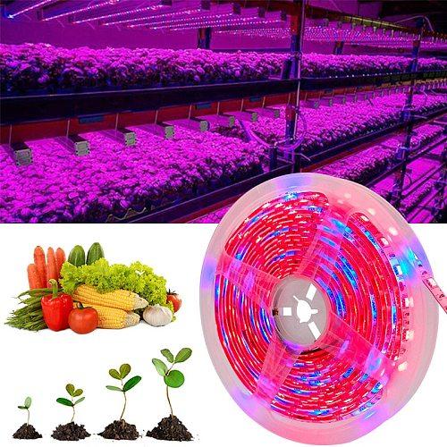 5M 10M 15M LED Grow Light Full Spectrum Growing Light Strip  SMD DC12V LED Phyto Tape for Seed Plants Flowers