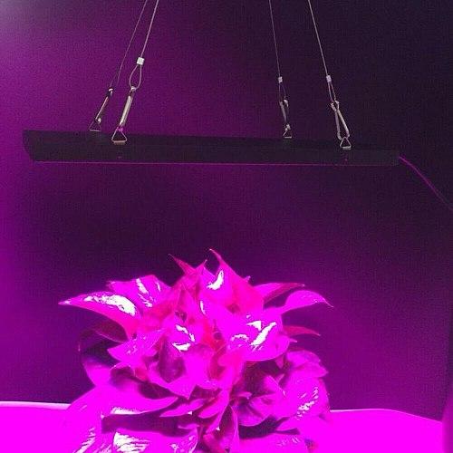 WAKYME 600W LED Grow Light Phyto Lamp Full Spectrum Plant Lamp Growing Light for Vertical Farming Veg Flower Seeds Indoor Plants