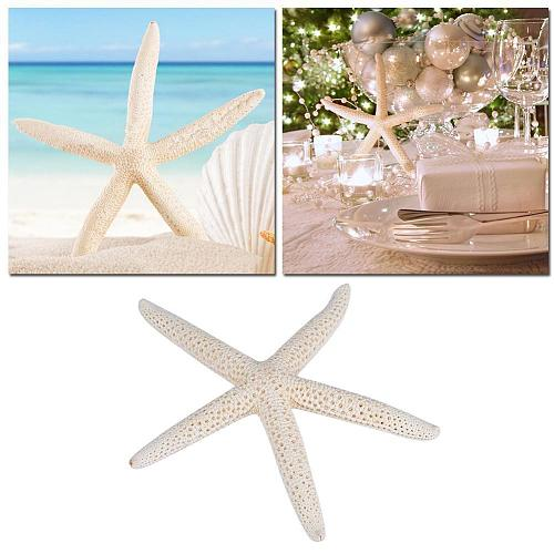12-23cm White Natural Five Finger Starfish Super Large Conch Shell Mediterranean Home Wedding Decoration Starfish Props Gift